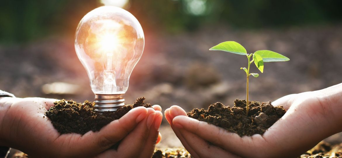 hand holding lightbulb with small tree. concept energy power in nature